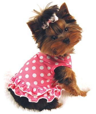 perro vestido